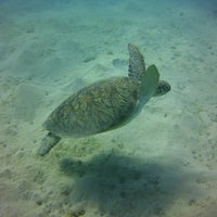 Photo taken at Coraya Divers by Alessia K. on 5/10/2013