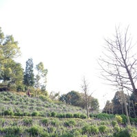 Photo taken at 薰衣草森林 Lavender Cottage by Mr. H. on 1/27/2013