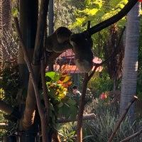Foto scattata a Koala Exhibit da Christopher J. il 1/20/2018