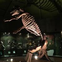 Photo taken at Museo de Paleontología by Alejandro M. on 5/7/2015