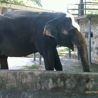 Photo taken at Zoo Negara (National Zoo) by Faridatul M. on 10/27/2012