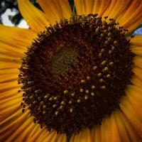 Das Foto wurde bei Katie Black's Garden von Todd N. am 8/30/2015 aufgenommen
