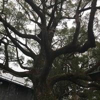 Photo taken at 天然記念物 那智の樟 by asami . on 2/25/2018