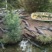 Photo taken at Alligator Adventure by Gary on 9/29/2012