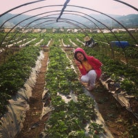Photo taken at Strawberry Farm by Jolie S. on 3/8/2013