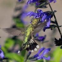 Photo taken at Minnesota Landscape Arboretum by Carl L. on 10/20/2013