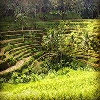 Снимок сделан в Tegallalang Rice Terraces пользователем Denis 5/7/2013
