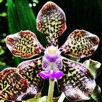 Das Foto wurde bei National Orchid Garden von Shahar N. am 2/27/2013 aufgenommen