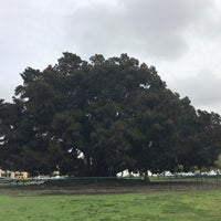 Photo taken at Moreton Bay Fig Tree by Vanessa H. on 1/12/2017