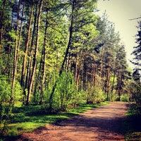Снимок сделан в Парк «Сосновка» пользователем Yulia E. 5/18/2013