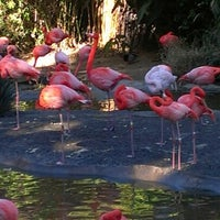 Photo taken at Flamingo Exhibit by Jeanne D. on 12/28/2012
