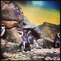 Foto tomada en Inside Penguin Crawl Tube por Alessandra B. el 4/9/2013