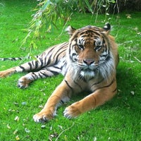 Photo taken at ZSL London Zoo by Chris S. on 10/18/2012