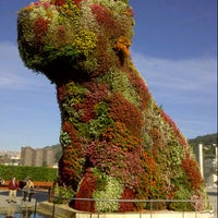 9/20/2012에 Jordi L.님이 Puppy (Guggenheim)에서 찍은 사진
