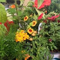 Photo taken at Nicks Garden Center & Farm Market by Natalie A. on 6/9/2013