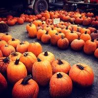 Foto tirada no(a) Union Square Greenmarket por Anne A. em 10/27/2012
