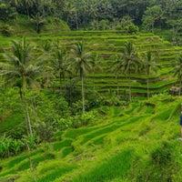 Снимок сделан в Tegallalang Rice Terraces пользователем patrick G. 7/29/2015
