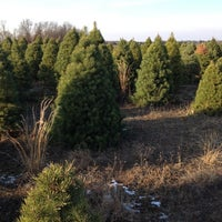Eby Pines Christmas Tree Lot - Bristol, IN