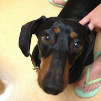 Photo taken at Albany Animal Hospital by Kimberly R. on 7/8/2013