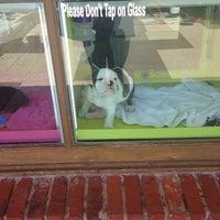 Photo taken at Diamonds & Doggies by Lauren K. on 5/4/2014