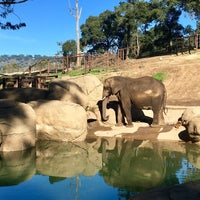 Photo taken at African Elephants by Jeff W. on 1/20/2018