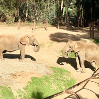 Photo taken at African Elephants by Jeff W. on 2/10/2018