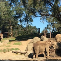 Photo taken at African Elephants by Jeff W. on 2/16/2018