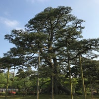 Photo taken at Neagarinomatsu Pine by pln on 5/14/2017