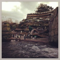 Photo taken at Penguin Exhibit by Christine B. on 2/24/2013