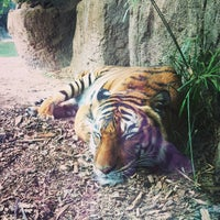 Photo taken at Reid Park Zoo by Kristi P. on 1/6/2013