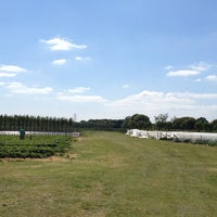 Photo taken at Cat And Fiddle Strawberry Fields by Penny_bt90 E. on 6/9/2013
