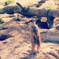 Das Foto wurde bei Kölner Zoo von Justolena am 4/20/2013 aufgenommen