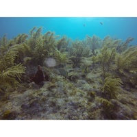 Photo taken at Underseas by Maxx E. on 8/17/2013