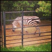 Photo taken at Prague Zoo by Михаил К. on 5/5/2013
