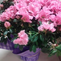 Photo taken at Coleen's Flower Shop by Ginnette P. on 6/5/2014