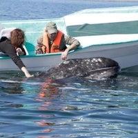 12/20/2012에 Juan Carlos M.님이 Marina Cabo San Lucas에서 찍은 사진