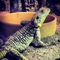 Photo taken at Porton Garden Aquatics & Pets by Mike J. on 9/29/2013