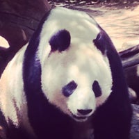 Photo taken at Giant Panda Research Station by Brandon E. on 6/6/2014