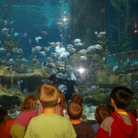 Photo taken at National Aquarium of New Zealand by Michael B. on 12/29/2012