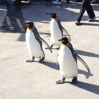 Photo taken at Calgary Zoo by Bryan L. on 3/23/2013