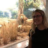 รูปภาพถ่ายที่ American Museum of Natural History Museum Shop โดย Kelli U. เมื่อ 7/17/2018