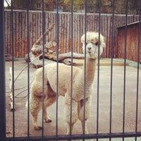 Das Foto wurde bei Зоопарк «Лимпопо» von Anton E. am 9/29/2012 aufgenommen
