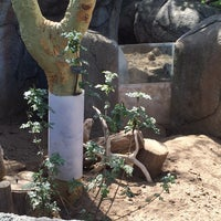 Photo taken at Meerkat Exhibit by kayla a. on 3/2/2016