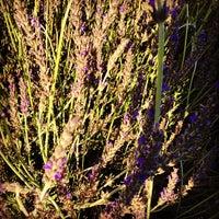 ... Photo Taken At Manhattan Beach Botanical Garden By Countess Rose P. On  4/28 ...