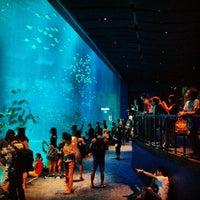 Photo taken at S.E.A. Aquarium by Abdullah H. on 2/10/2013