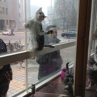 Photo taken at Happy Pet Animal Hospital 猫腾狗跃动物医院 by Valery K. on 4/14/2013