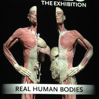 10/12/2012 tarihinde Chris A.ziyaretçi tarafından BODIES...The Exhibition'de çekilen fotoğraf