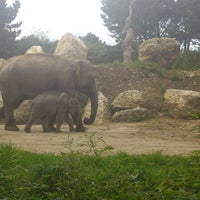 Photo prise au Zoo de Pont Scorff par kevin l. le4/28/2013