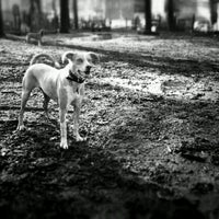Photo taken at McCarren Dog Park by Ned R. on 12/18/2012