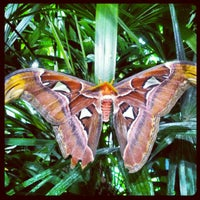 Photo taken at The Butterfly Conservatory at the American Museum of Natural History by Louis M. on 10/27/2012